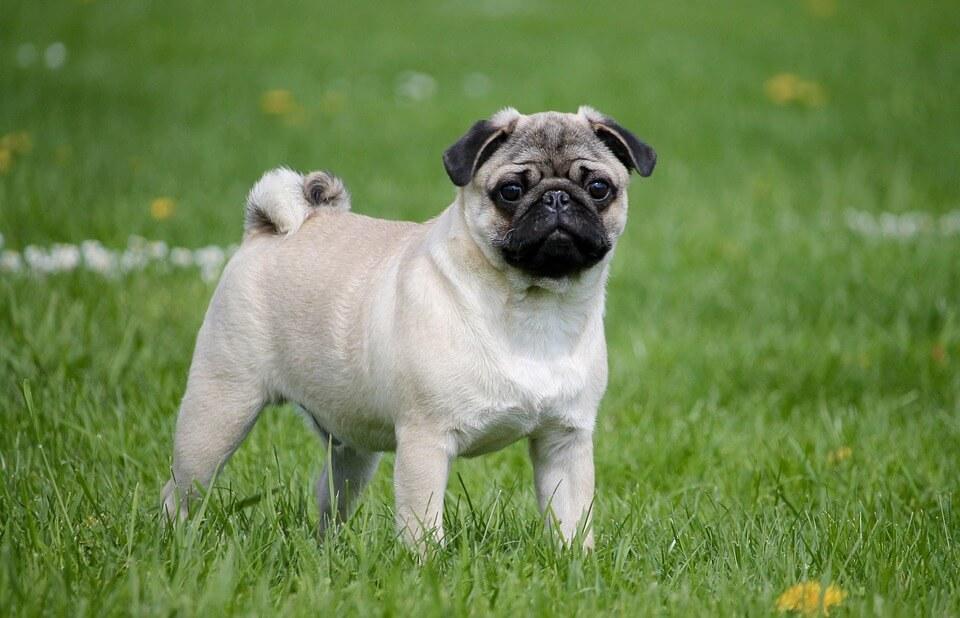 ¿Cuándo es obligatorio tener un seguro para tu mascota?
